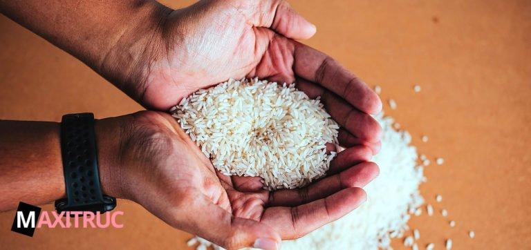 les variétés de riz bio